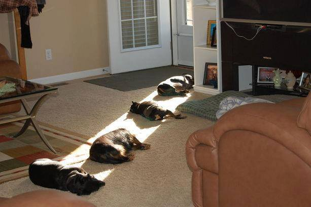 Cats Laying in the Sun